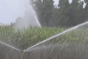 少雨傾向で各地でスプリンクラーが稼働している=10日、下地嘉手苅のサトウキビ畑